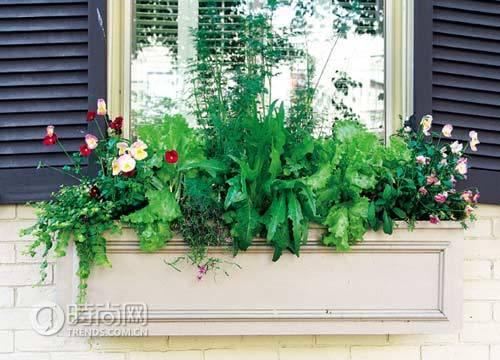 6方法让阳台花卉安全度夏