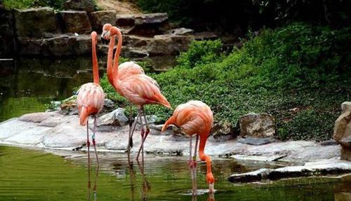 红山森林动物园图片