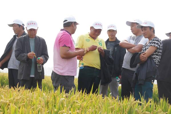 鹏昊集团水稻良种场是辽宁省种子管理局的水稻新