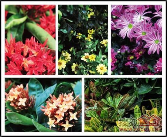 以确保高成活率;另外,通过平面构图,植物色彩,小品设置,组团主题的不