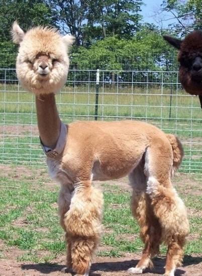 剃毛什么的最悲催了 动物搞怪可爱家居照