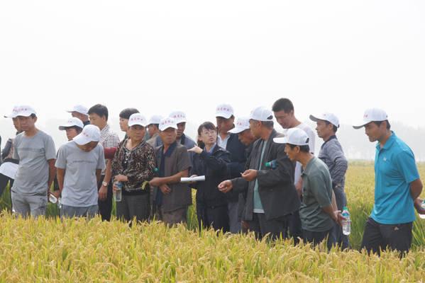鹏昊集团水稻良种场不仅拥有种子公司经营的水稻品种