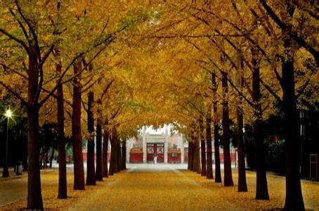 地坛公园银杏树_地坛银杏节是地坛公园近几年倾力打造的品牌活动.