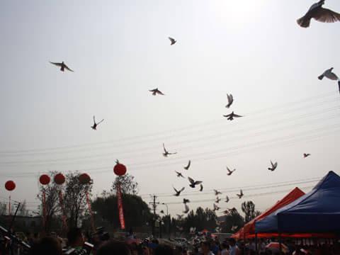 放飞和平鸽图片简笔画_放飞和平鸽的图片