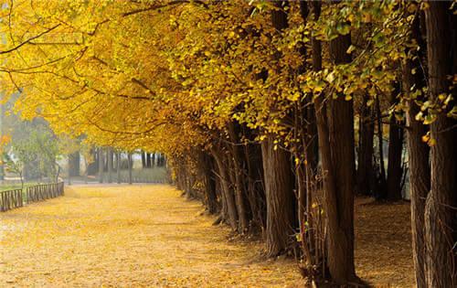 树iphone6壁纸